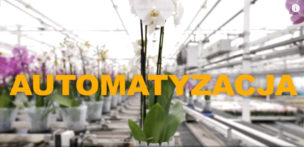 jmp flowers Automatyzacja